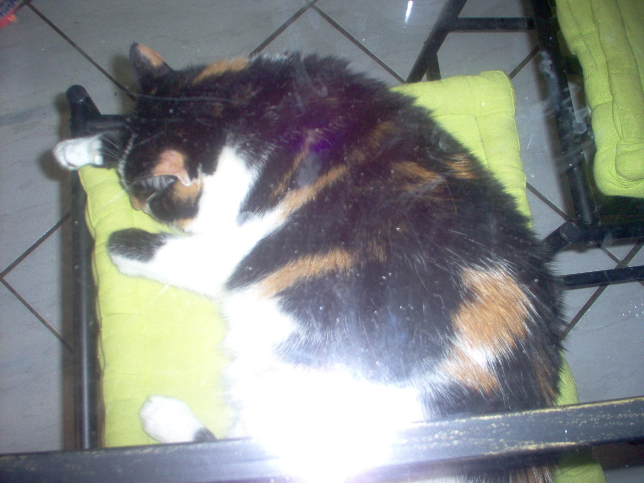 comment maigrir un chat - Comment maigrir